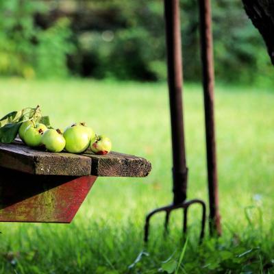 Garden 1574740 1920